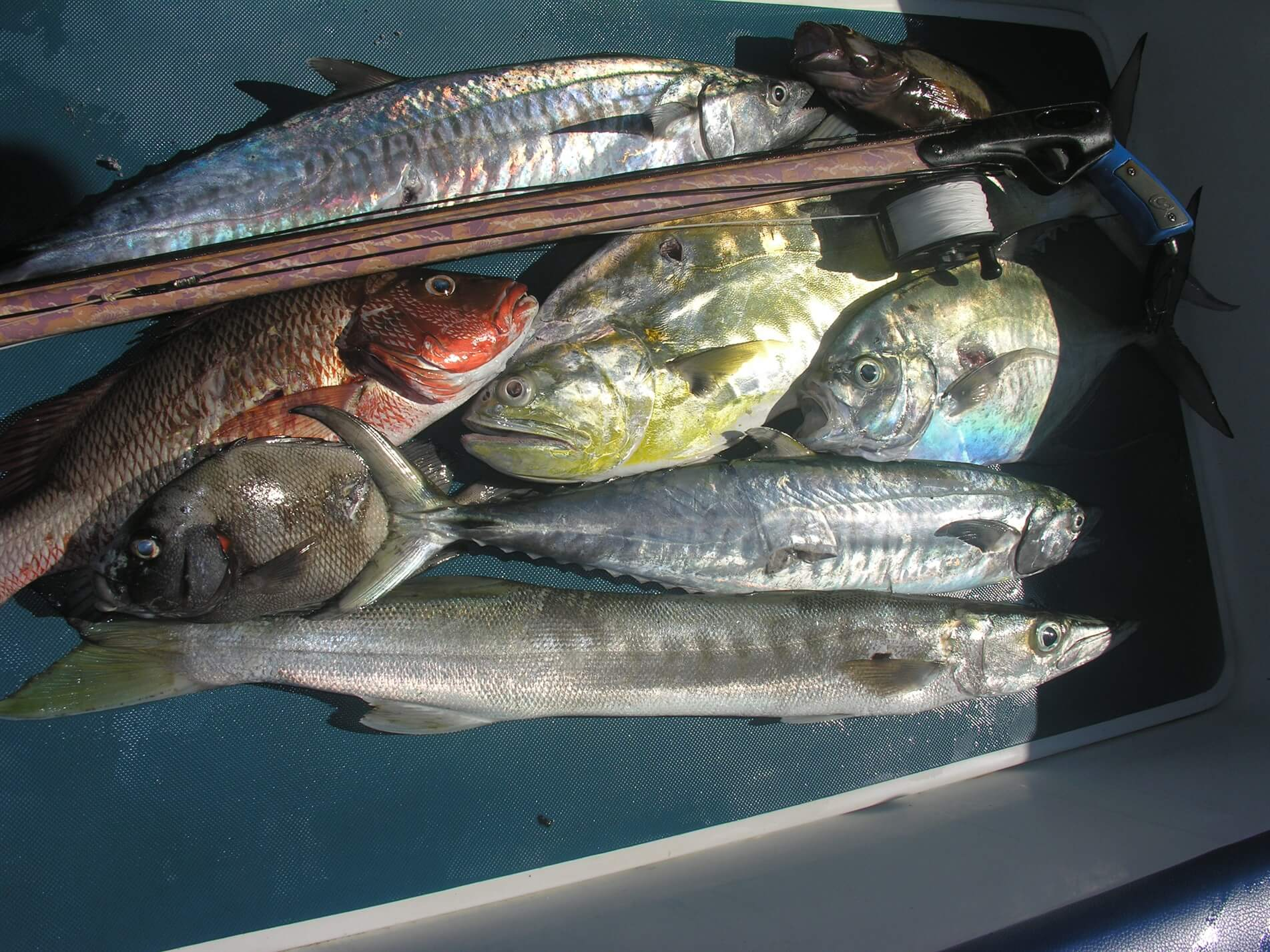 Explore this rich culture while hunting monster dogtooth tuna at a price thats easy on the wallet.