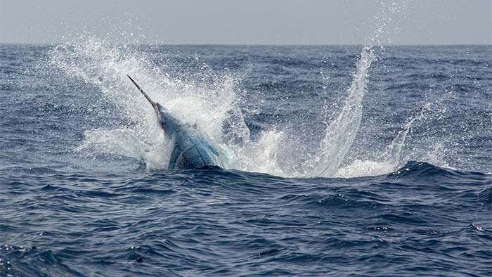 Spearfishing in Cape Verde